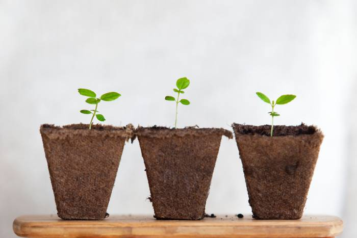 Three pots with seedlings