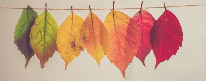 autumn leaves on a string